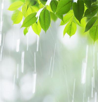 空氣濕度對蘇州綠植租賃有製約