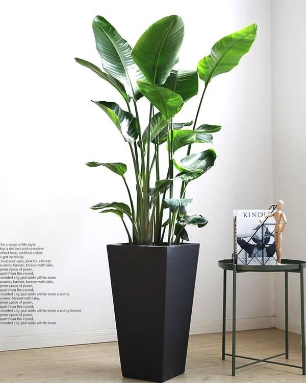 光照蘇州綠植租賃對植物生長有影響