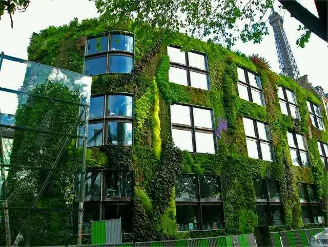 植物墻,無論室內外,讓你的生活多一片綠色