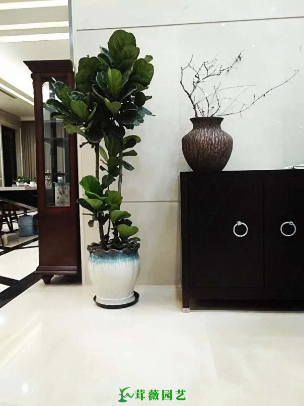 常用陶瓷花盆