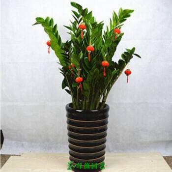 常用陶瓷花盆 (15)
