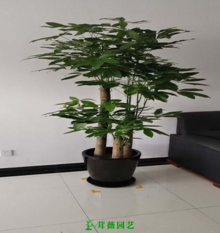 常用陶瓷花盆 (7)