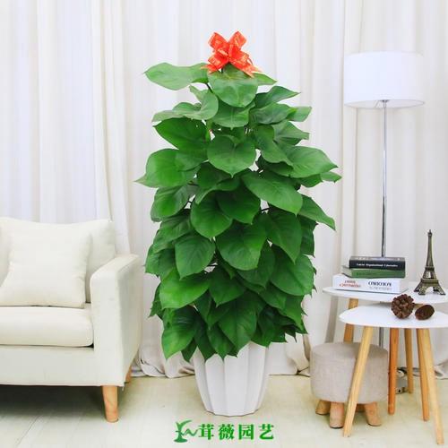 常用陶瓷花盆 (14)
