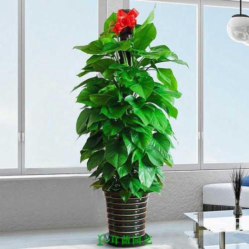 常用陶瓷花盆 (13)