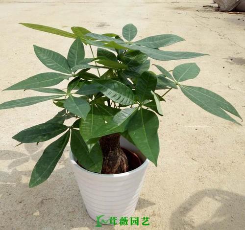常用陶瓷花盆 (12)