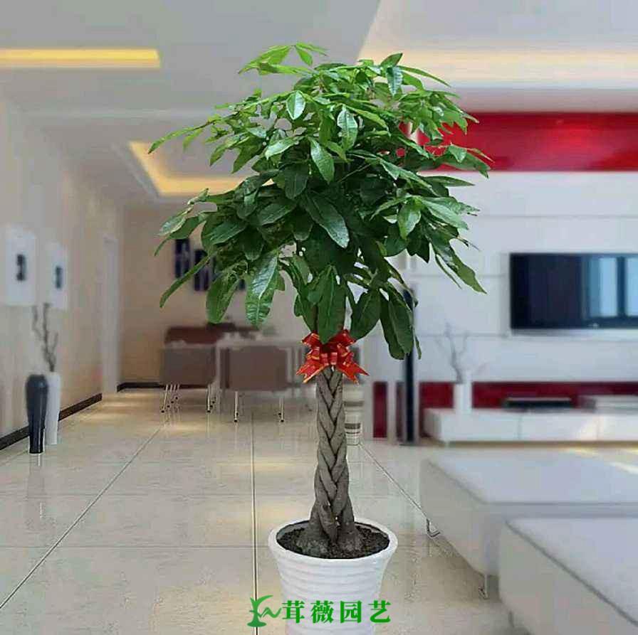 常用陶瓷花盆 (11)