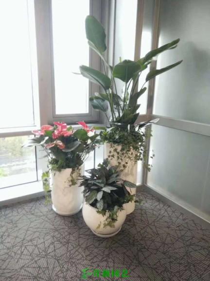 常用陶瓷花盆 (1)