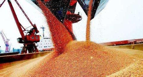 """重磅!豆粕下跌,玉米""""瘋了""""..."""
