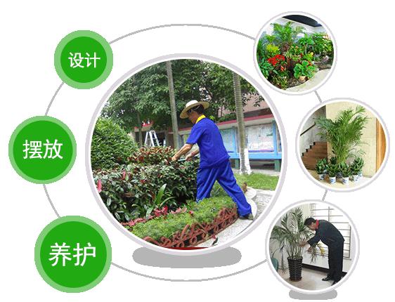 上海大型绿植种植基地