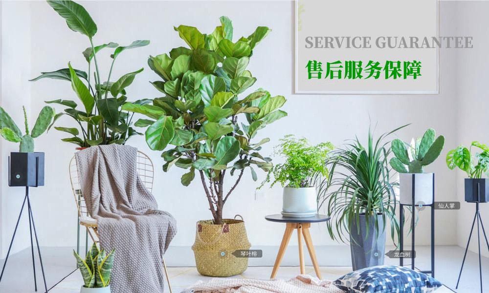 植物租赁公司售后保障