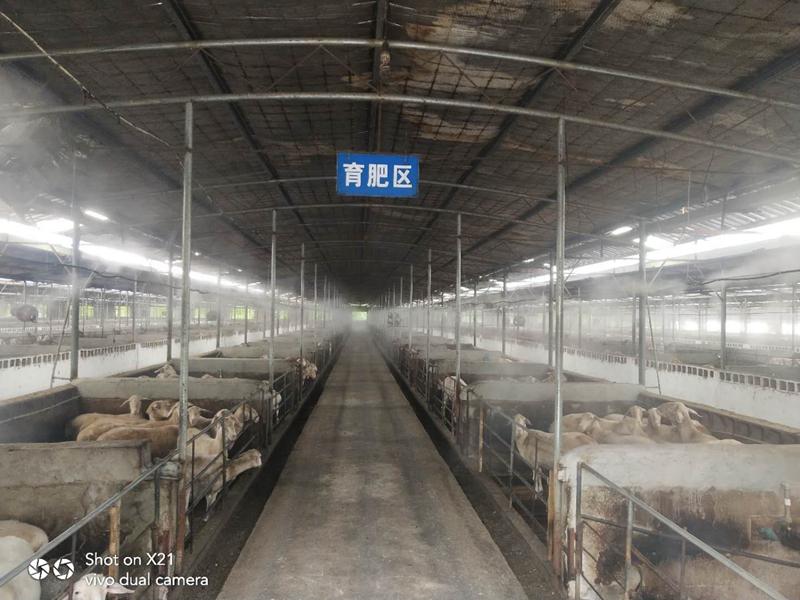 養殖場噴霧消毒設備
