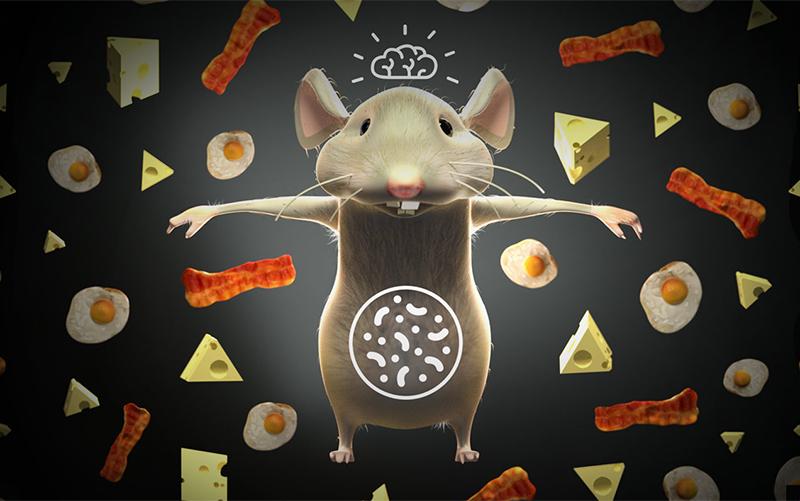 """最新Nature:高脂肪、低碳水化合物饮食,让""""抗癌药""""更有效!"""