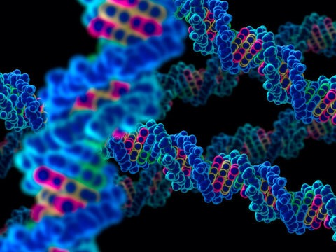 跳跃基因:物种跨越,人类进化的新型遗传方...