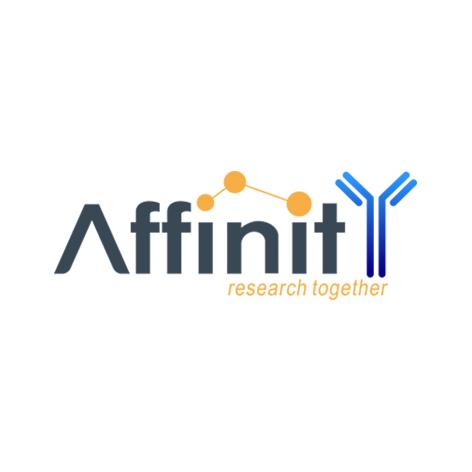 affinity品牌介绍