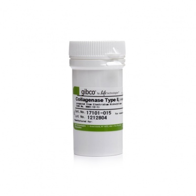 17101015|Gibco™ Collagenase, Type II, powder