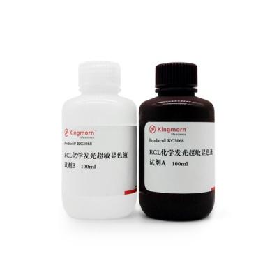 KC3068|kingmorn|增强型ECL化学发光显色试剂盒