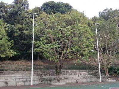 中山10米球场灯项目