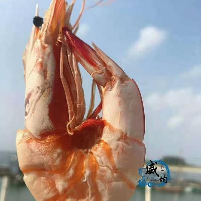 野生海大虾干160元/斤