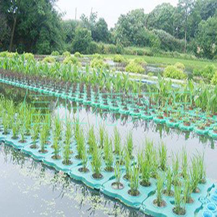 生物浮床种植相关植物介绍