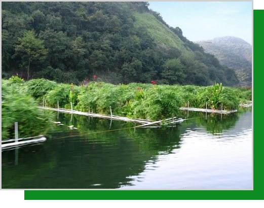 不同覆盖度生态浮床净化污染水体...