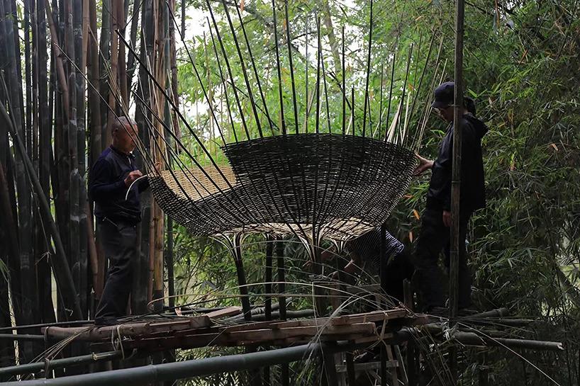 在青神森林的活枝上建立独立的竹巢
