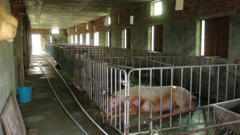 论养猪场安装土禾负压风机的意义