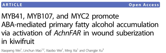 MYB41, MYB107, and MYC2 promote ABA-mediated primary fatty alcohol accumulation via activation of AchnFAR in wound suberization in kiwifruit