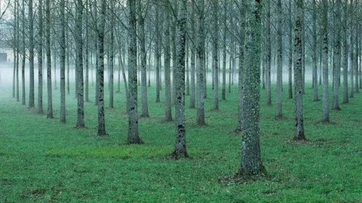 我国人工林新时代发展形势分析