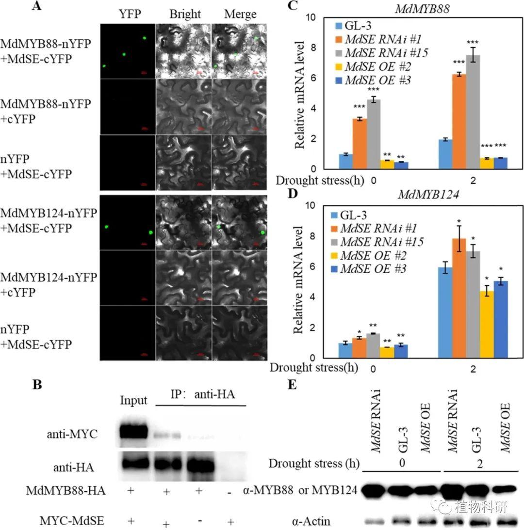 转录和蛋白表达水平