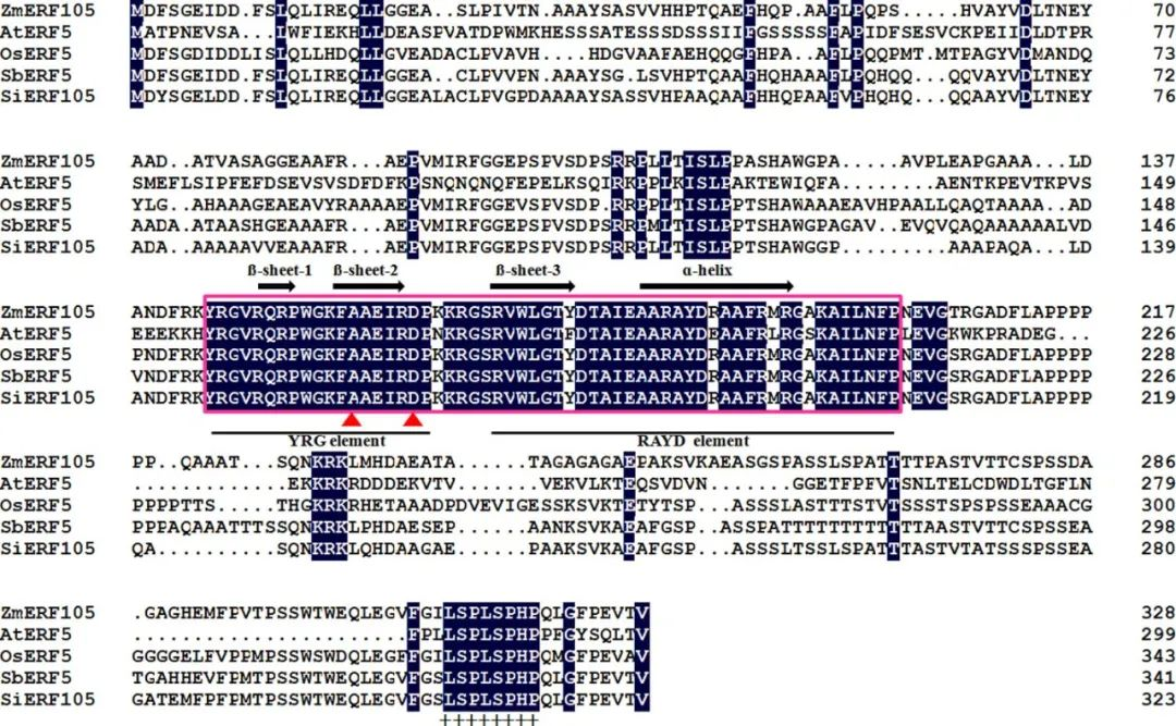 蛋白序列對比
