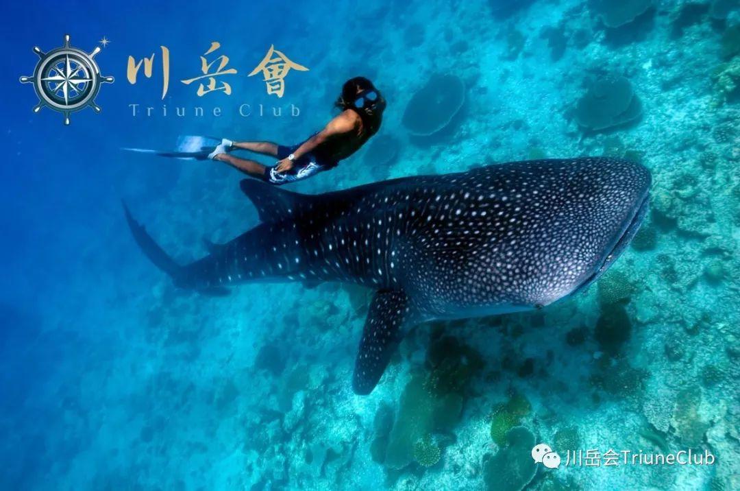【远征直击】小小探险家-哥斯达黎加&墨西哥(下)| 鲸鲨同游&重历玛雅文明