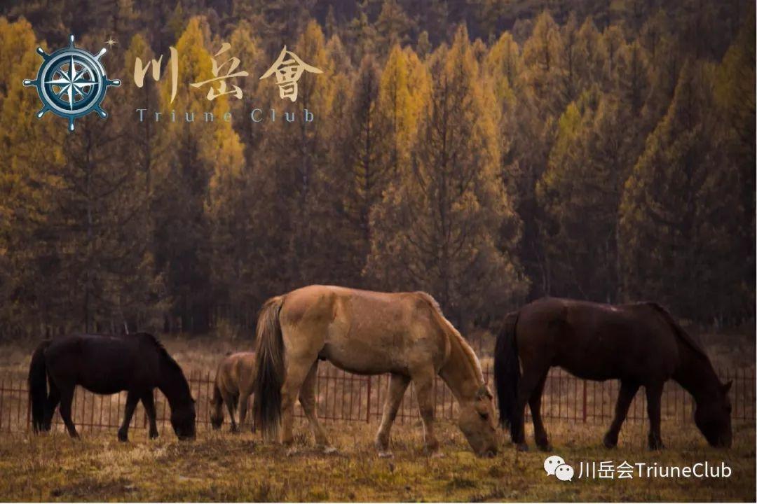【远征直击】蒙古国秋日传奇(...